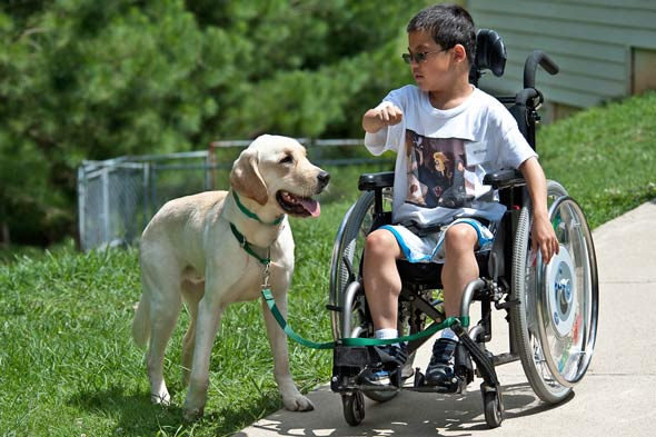Service Animals For Disability Mobility